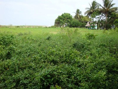 Terrenos De 200m2 En Playa De Vaca, Boca Del Rio,veracruz.