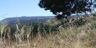 Terreno En San Lorenzo, Rancho De La Soledad